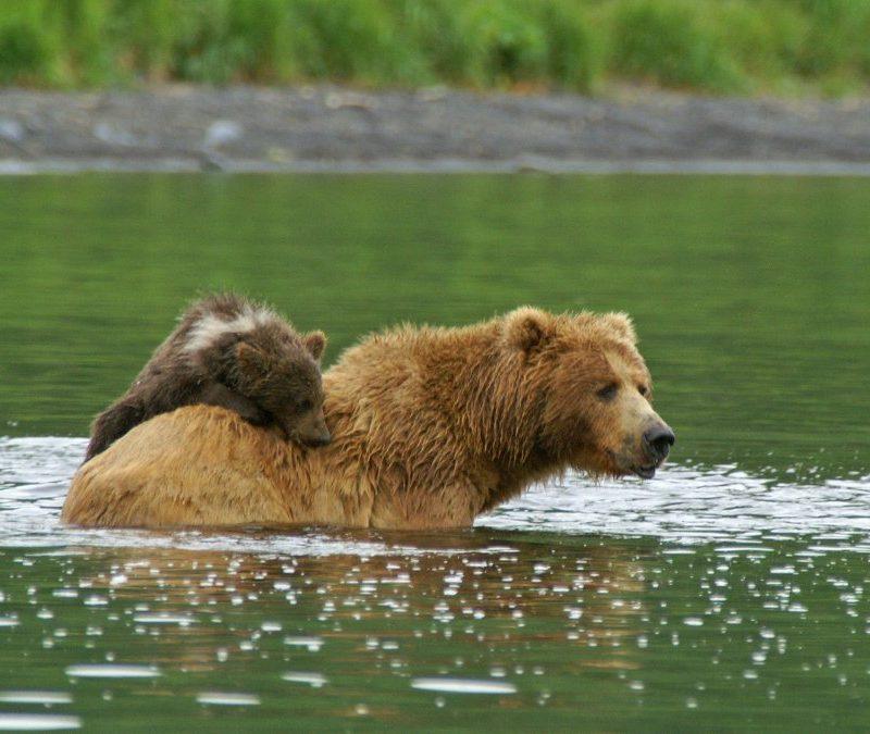 KBBC Bears